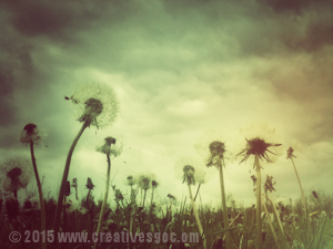 dandelion image colour wash example