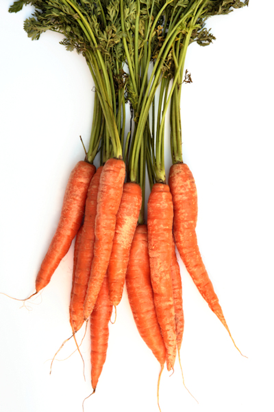 white background carrots